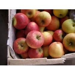 Pomme Melrose/kg