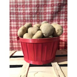 pomme de terre /1kg